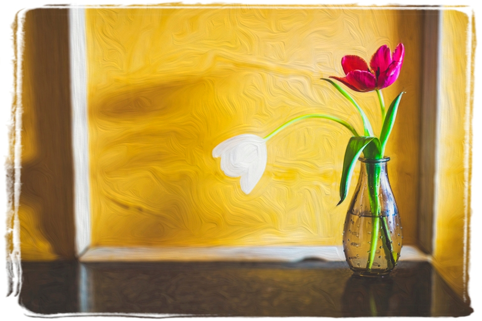 Tulips on a table, www.aggiebrooks.com